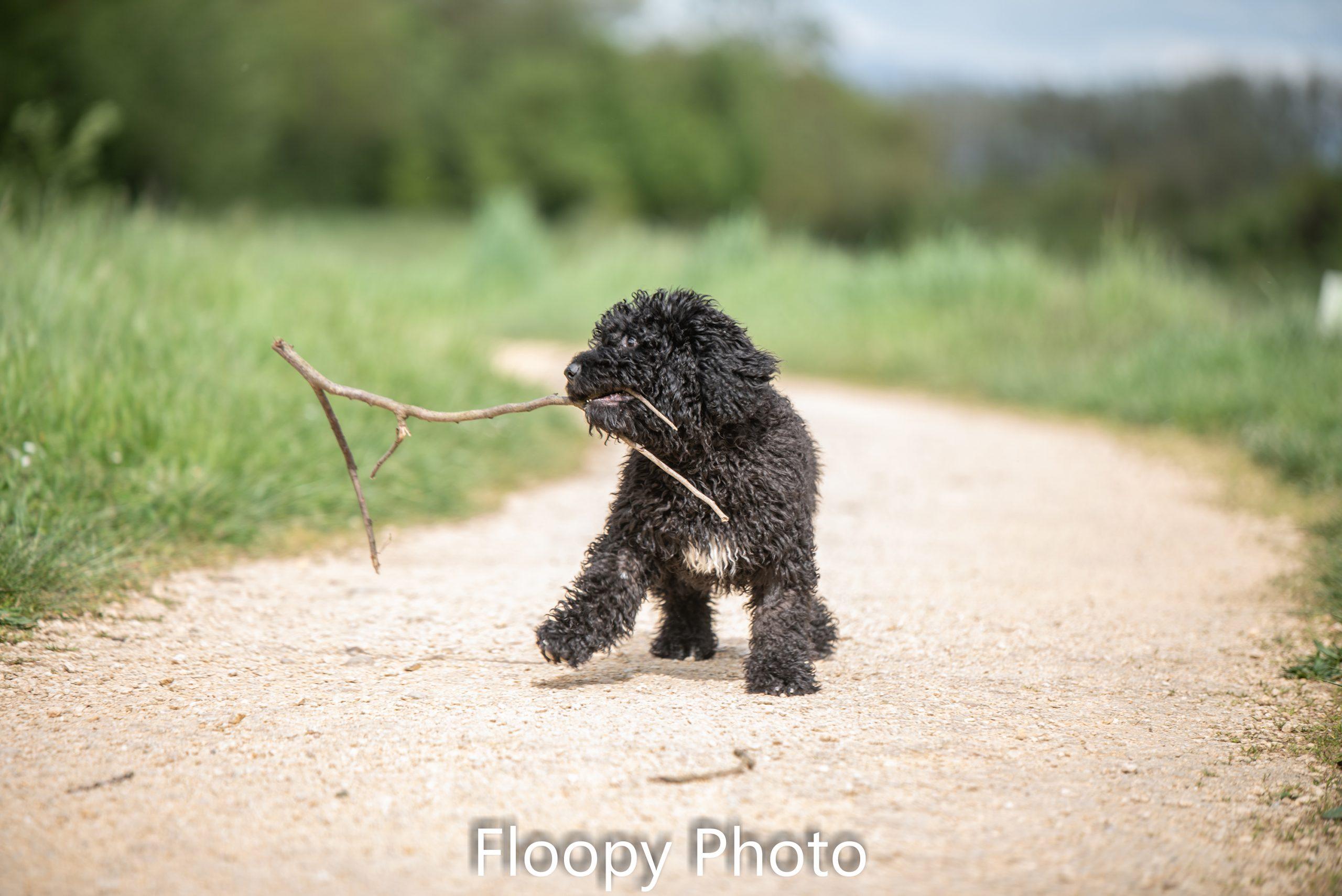Floopy Photo-5196