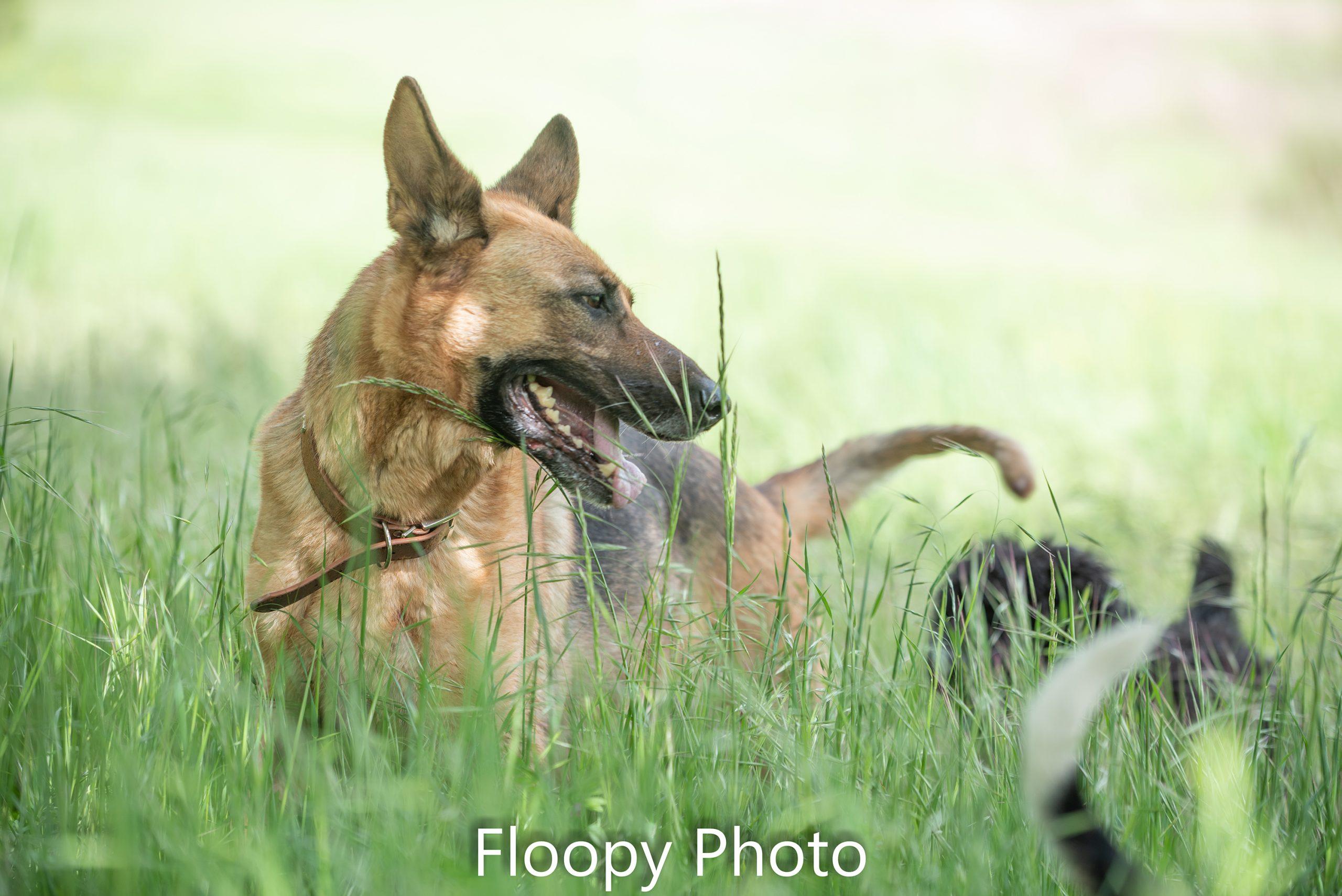 Floopy Photo-5260