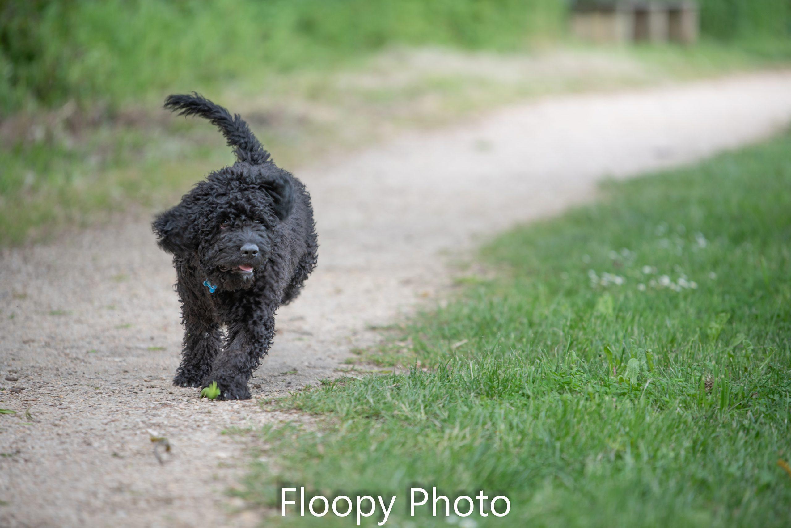 Floopy Photo-5277